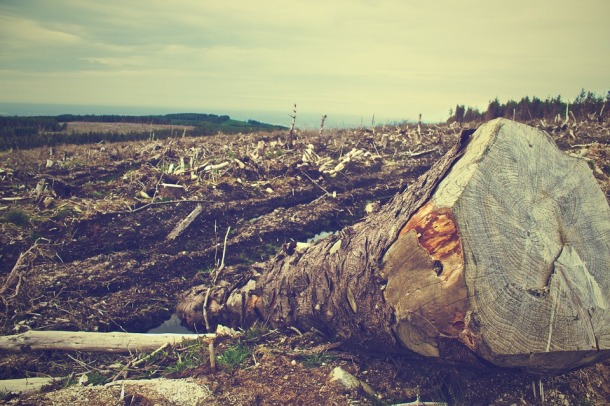 deforestation-405749_960_720