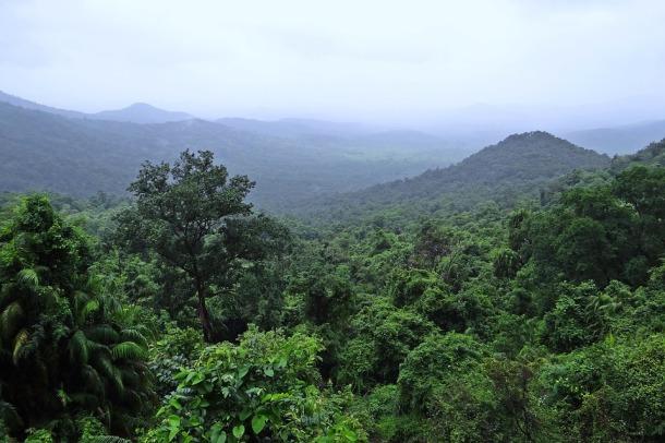 rainforest-384944_960_720.jpg