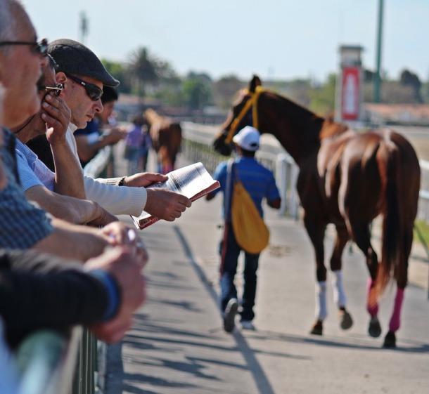 horse-racing-1692364_960_720.jpg